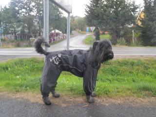 regndress för hund, Hurtta