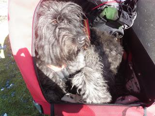 cykelkärra för hund, långtur med hund
