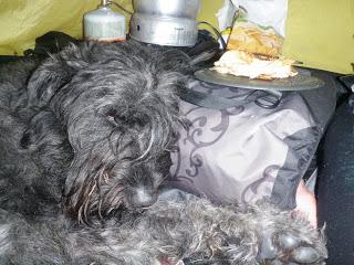 tältliv, hund, bouvier des flandres, somnar på maten