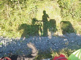 skugga, hund cykel människa