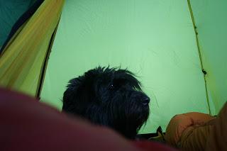 tält, vega, hund